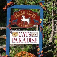 Cat's Paradise Spa & Boarding Retreat logo