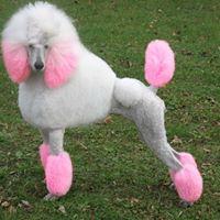 Creative Clips Dog Grooming logo
