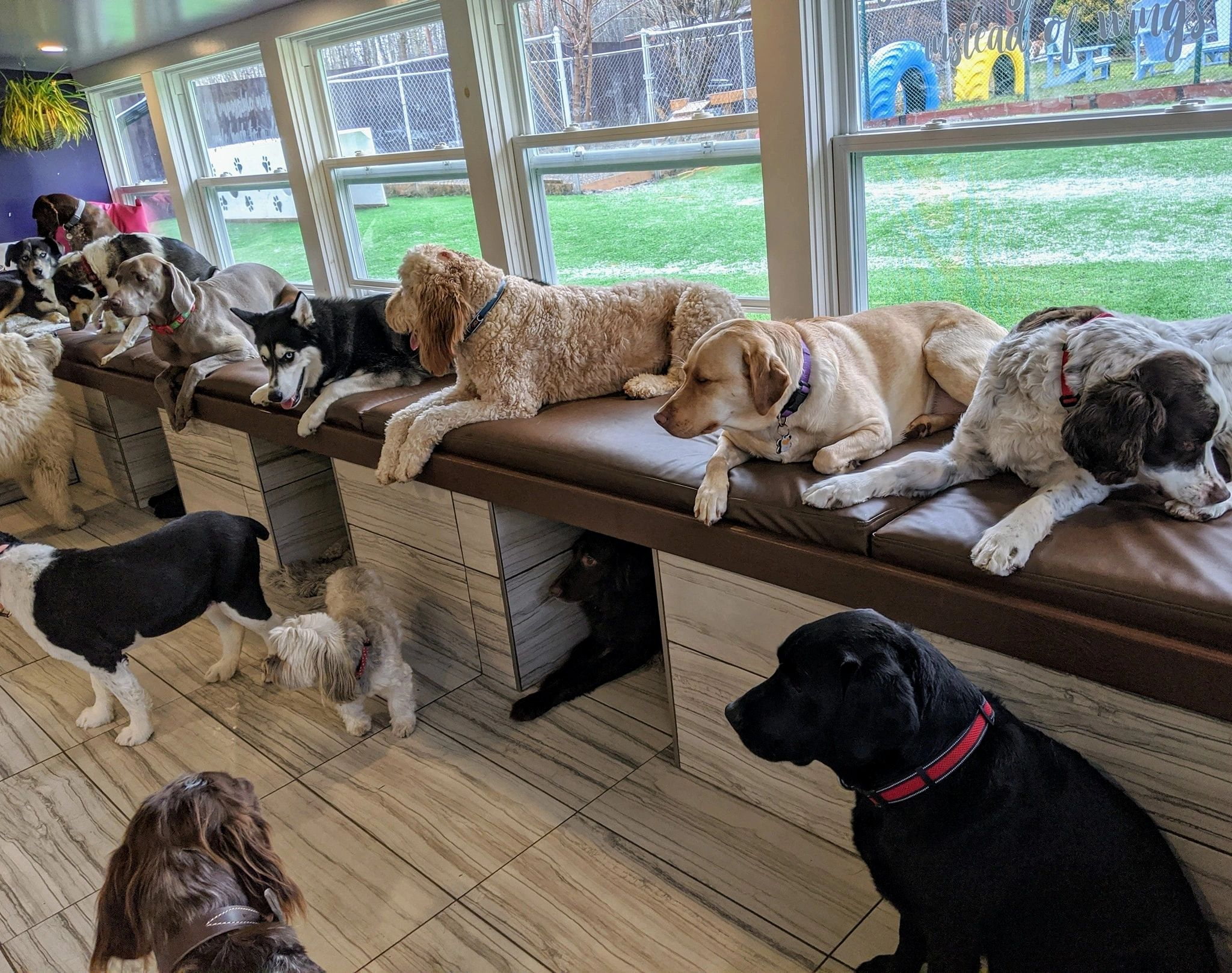 Chris's Dog Hotel No Cages Luxury Pet Resort - FuzzyButtz Grooming logo