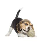 Cornwall Veterinary Services logo