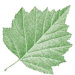 Seasons Naturopathic Clinic logo