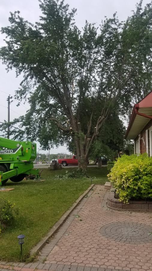 C & D Excavating & Tree Service Ltd logo