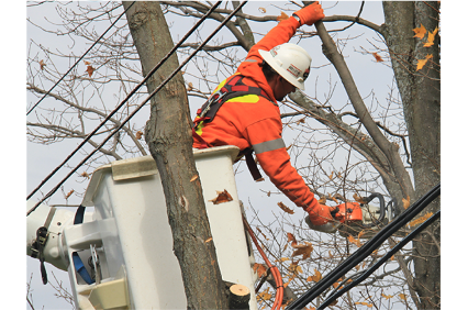 Photo uploaded by Arbrecare Tree Service