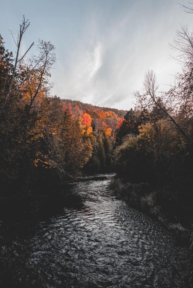 Nature near Brockville, ON
